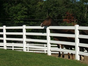 Ranch Rail Vinyl Fence